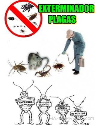 Exterminador control de plagas sevilla limpieza for Control de plagas sevilla
