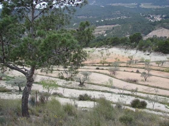 Gestión de fincas de cultivo y forestales. Proyectos