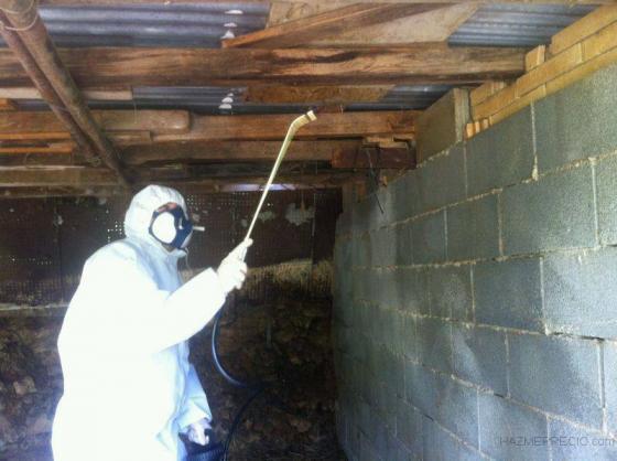 fumigación contra pulgas