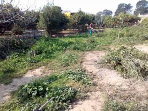 Este es el jardín al cual hay que desbrozar